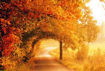 Strade... / la strada è per me una metafora meravigliosa della Vita. Le strade che siano sentieri di montagna o meravigliosi scorci cittadini dell' Europa medievale o le grandissime strade americane...vanno osservate, ammirate scoperte, percorse ed affrontate...Proprio come la Vita...perchè proprio in questo la Vita si distingue dall'esistenza!