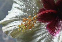 Sparkling drops / Wassertropfen, glitzernde Perlen, Tropfenbild, Regentropfen, Morgentau, Tautropfen, Blumen,