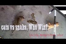 Cat vs Snake or Tiger vs Dragon