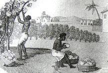 histoire du coton