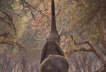 Animals / Love animals!! / by Cindi Zuck Hildebrandt