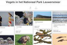 Natuur - fauna in Nederland / Dieren in Nederland - grond - lucht - water #fauna #Nederland #vogels #vissen #zoogdieren #dieren #natuur