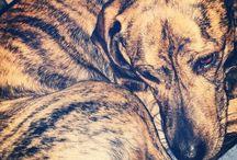 Dog Love / by Samantha L. Pickard