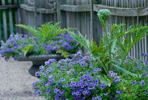 Container Gardening / Colourful Gardens in Pots