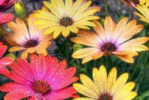 Virágok és növények
