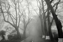 Spooky Tree's / by Kimbooly's Spooklings