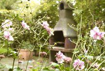 Trädgård - Garden - Flowers - Plants / Hemisfärs styling pictures for gardens.