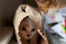 Fur purrrrr....... / Not only cats