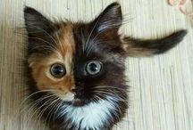 cats —>