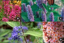 #jardinagepourlesnuls