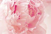 Fleurs signification