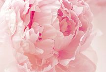 Flowers of my soul•