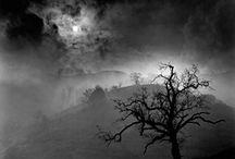 PHOTO - Wynn Bullock