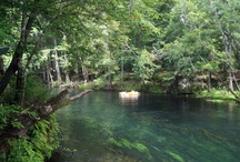 Florida's Springs: Summer Cool Down