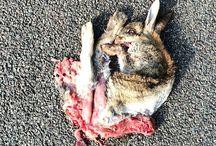 Faunaverkeerslachtoffers