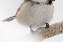 Bird Land / fat little birds