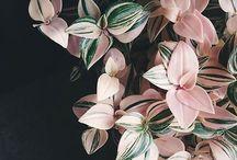 Flowers flowers flowers!