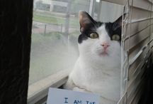 Kitty Cat's ♡ / by Janet Davis