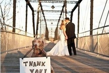 Wedding thank yous / by Dianna West