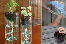 bouteilles plantes
