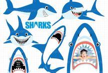 žralok narozeniny