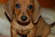 One Day - Puppy
