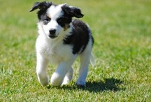 Puppies / by Pam's Dog Academy