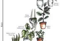 Plant 'knowhow'