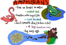 boy scout amphibians and reptiles