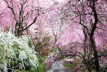 原谷苑の桜 / 原谷苑の桜