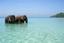 Earthly Paradise / Amazing places