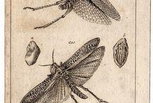 creations_scientific illustrations