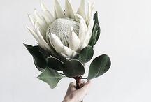Floral Spring 2018