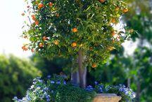 live plants for wedding decor