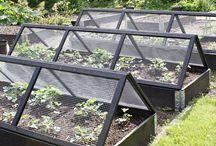 Lilsis Garden, tips och idéer