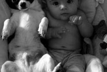animales con bebes