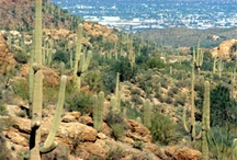Explore Tucson