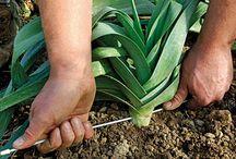 Jardinage / trucs pour le jardinage