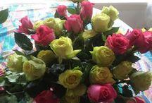 Viva Roses