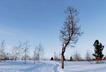 Зима / Я живу в северном городе, и зима здесь длится 9-10 месяцев. Но не это самое главное! В этом городе самые прекрасные снежные леса, хоть всюду ели и березы, кататься на любых здесь очень весело.
