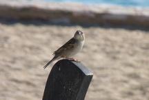 Birds / by Cathie O'Dea