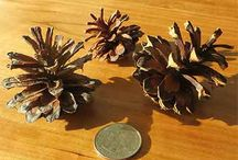 Pinecones, big and small, natural and embellished / Various types and styles of pine cones, perfect for decorating and crafts.