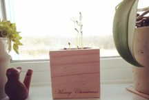 Christmas / Growing and decorating...