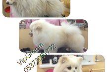 VipGroom / Grooming. Pet. Dog. VipGroom saloon