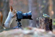 Natura / Bellissime immagini della natura che ci circonda.. e nemmeno ce ne accorgiamo.