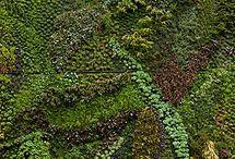 Paredes verdes / Green walls