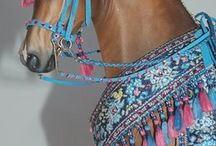 HORSES ⭐️