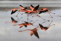 Flaming Flamingos  / by Debra Middleton