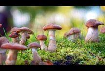 Fungi (ENWC)