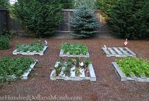 Gardening / by Nicole Bieri